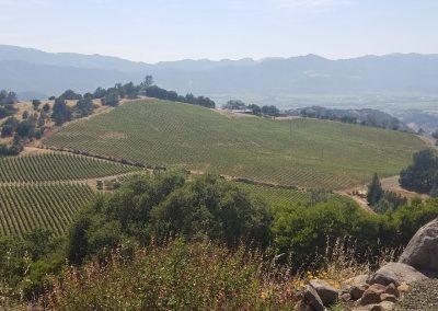 Vineyard Photo #1