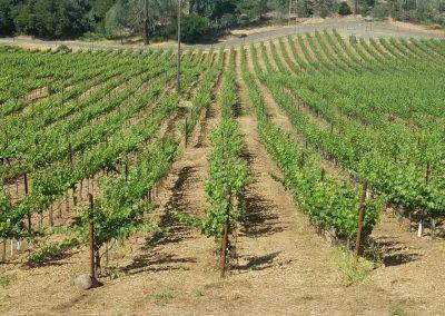 Vineyard Photo #3