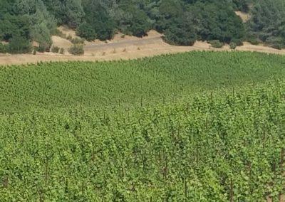 Vineyard Photo #6