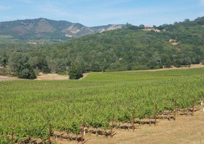 Vineyard Photo #7